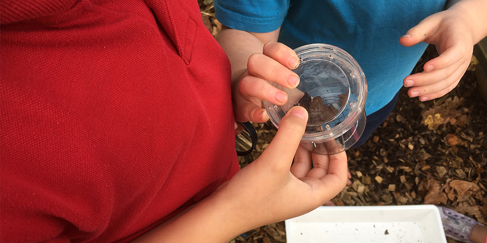 Learning about biodiversity on school grounds.